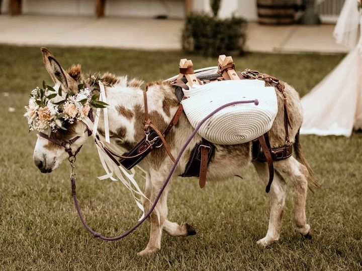 Tmx Img 4795 51 1069377 161349851385039 Fort Myers, FL wedding florist