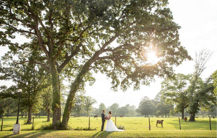 pedigo photography houston wedding photography