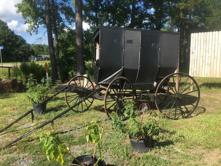 Authentic Amish wagon... elegant entry for the lovely bride!