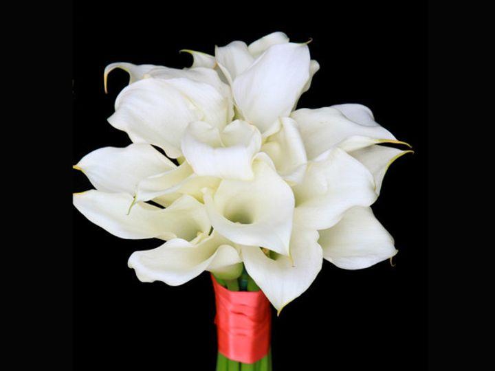 Tmx 1393375410109 Whitecallascora Virginia Beach, Virginia wedding florist