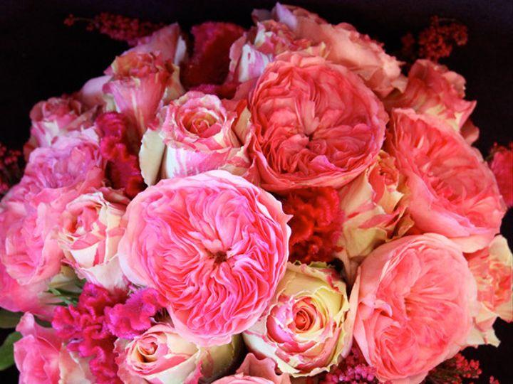 Tmx 1393522424450 Pinkgardenrose Virginia Beach, Virginia wedding florist