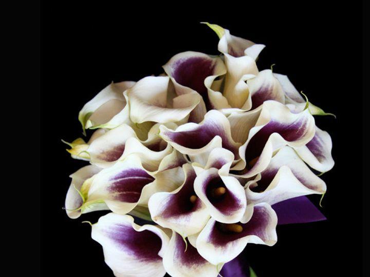 Tmx 1394219809007 Picassocallas Virginia Beach, Virginia wedding florist