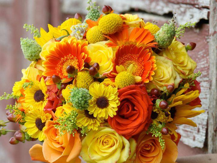 Tmx 1394224566406 Yellorgsmith Virginia Beach, Virginia wedding florist