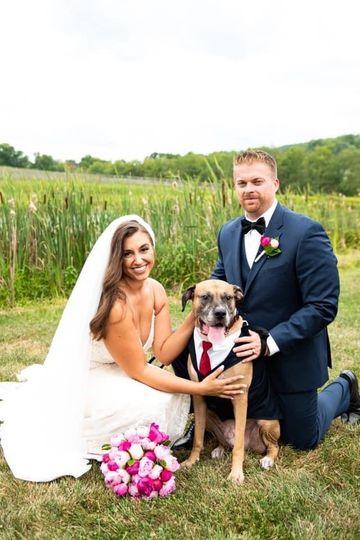 Dog Friendly Farm