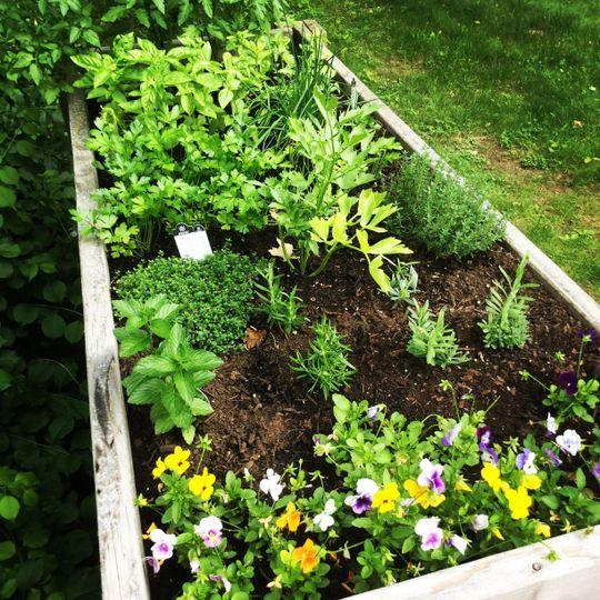 Our home garden thriving for wedding season