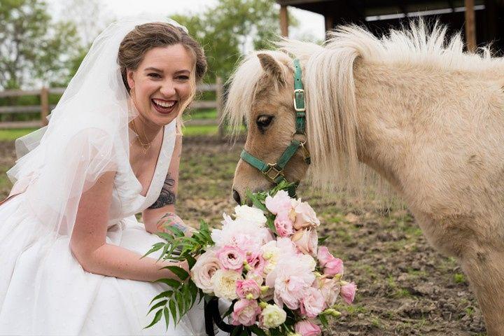 horsefarm 51 24287 1558554926