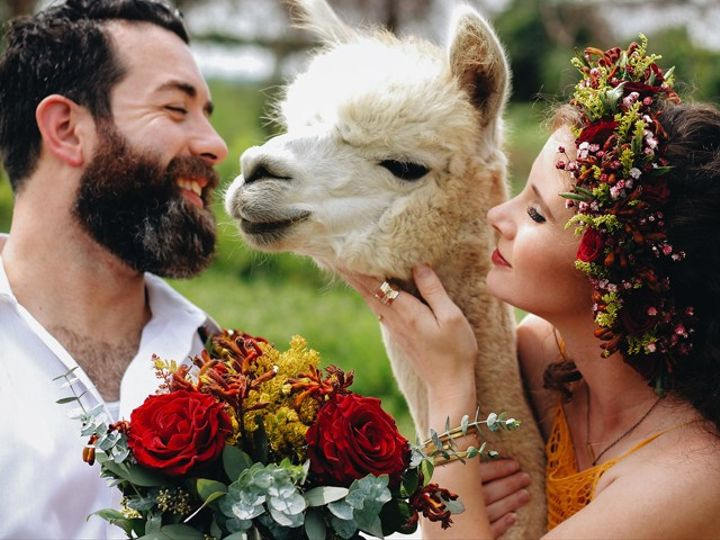 Tmx Alpaca 51 24287 1558554922 West Bloomfield, MI wedding florist