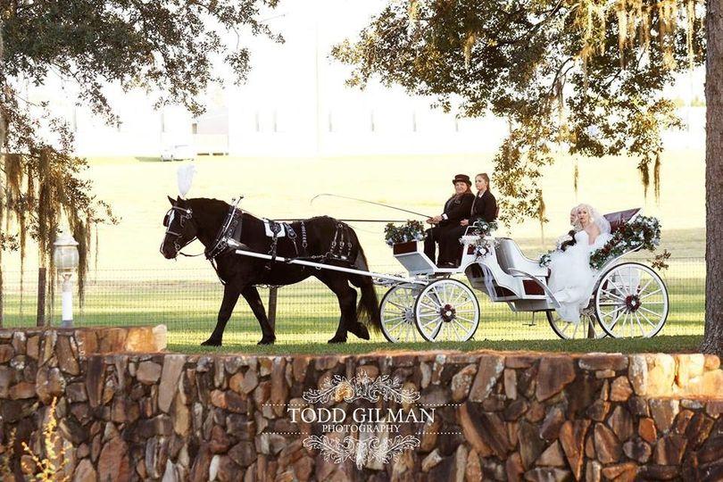 Horse wedding ride