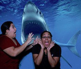 shark gs