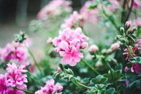 Emily Pillon Photography