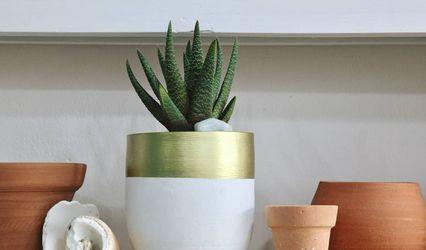 Plant revolution