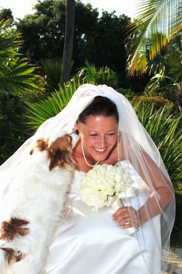 Barbara Knowles Wedding Photography and Planner - Dog