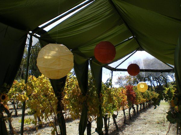 Fabric entry canopy with colored paper lanterns set among the grapevines. Courtesy of Buffy...