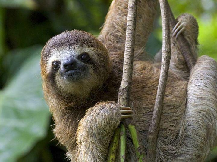 Tmx Nayara Tented Camp Sloth Refuge 51 659097 1570839244 Chicago wedding travel