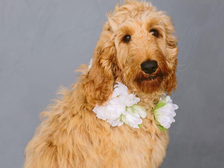 Tmx Audrey555 51 993197 159561635464904 Lafayette, Louisiana wedding florist