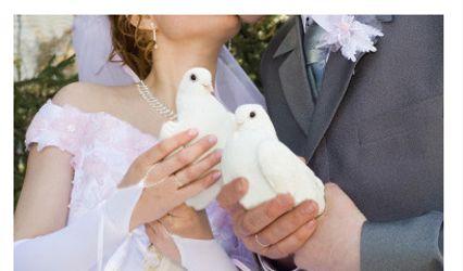 White Dove Memory