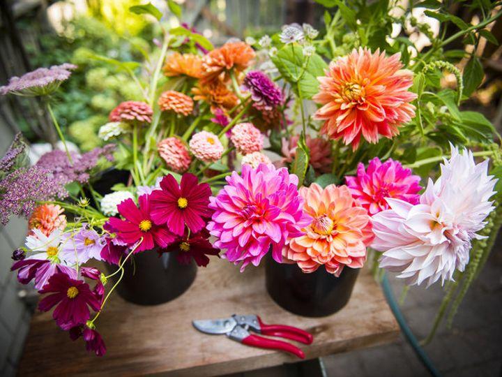 Tmx Rootsofjoy Garden 081718 Dsc 2688 51 1041397 Portland, OR wedding florist