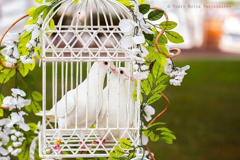 Romantic Doves