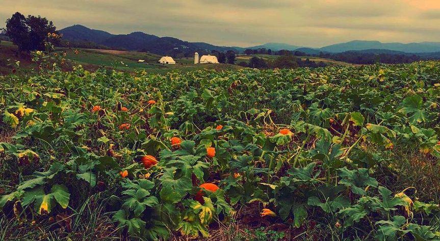 Sinkland Farms - Venue - Christiansburg, VA - WeddingWire