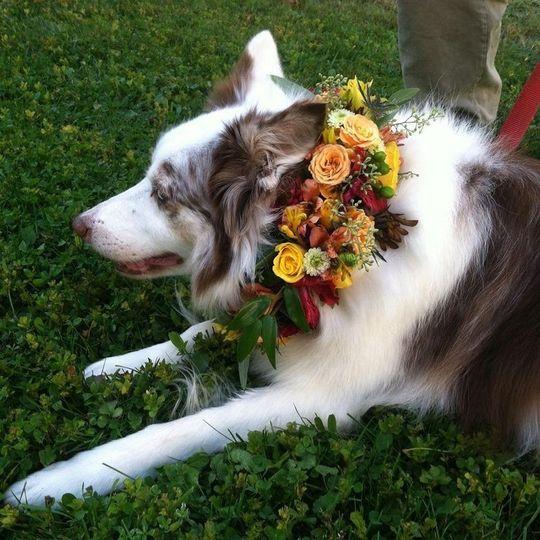 noah floral collar 001
