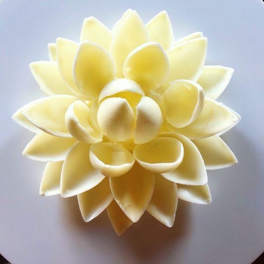 White Chocolate Lotus Flower