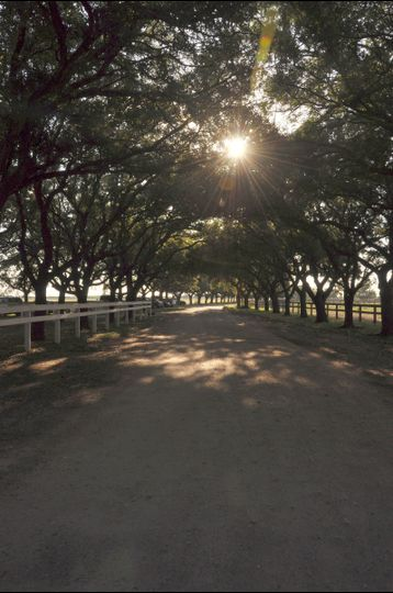 Our main drive....a perfect place for a grand entry or a grand exit!