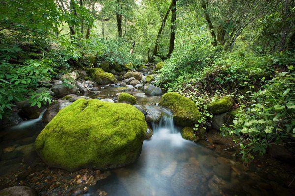 Biter Creek