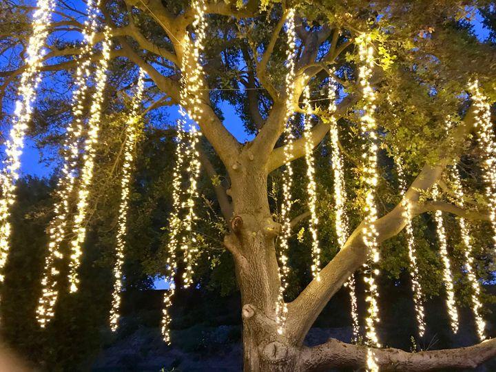 Wedding tree lighting