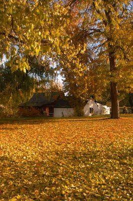 leaves ground w lil garage
