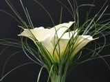 bouquet0033
