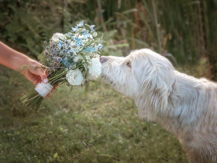 Tmx Vermont Dogs In Weddings 51 633508 159864443367913 Woodstock, VT wedding photography