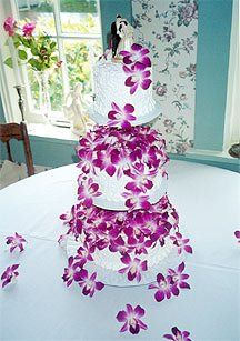 Tmx 1316010630364 2 Saint Petersburg, Florida wedding cake