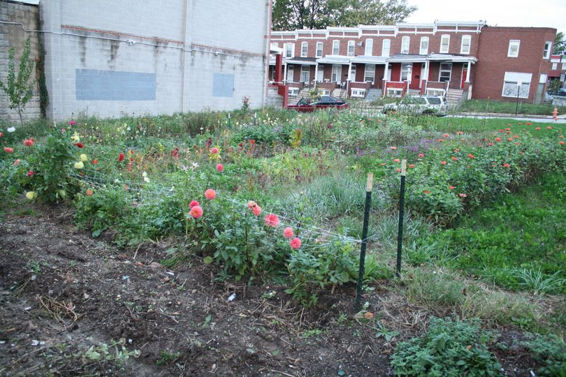 Our original site full of flowers in the summer. Photo by maya kosok
