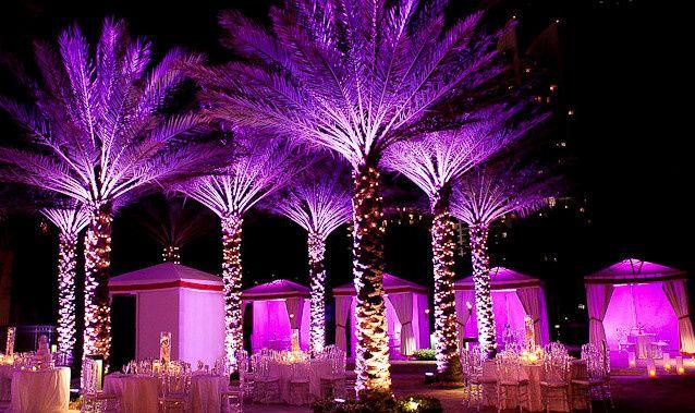 Violet trees