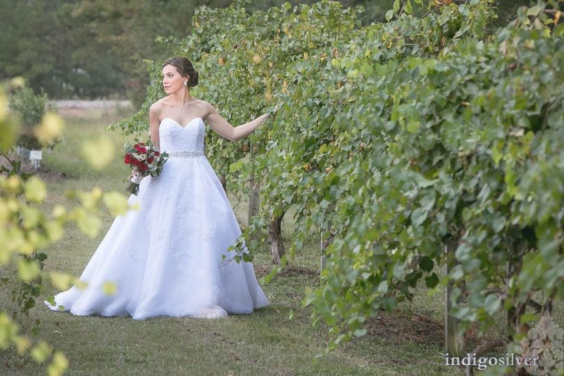 Bridal in grape field