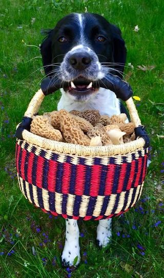 good boy w morel mushrooms 51 163018 1571074022