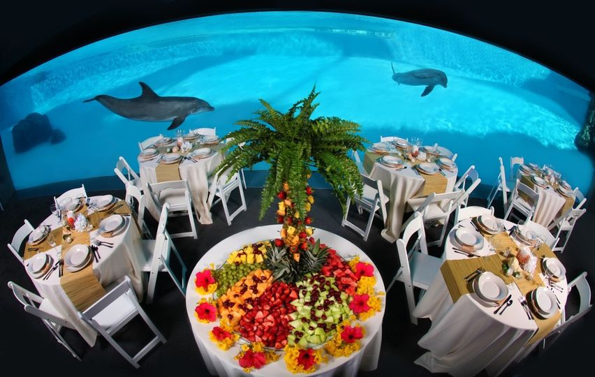 dolphins with fruit display underwater viewing