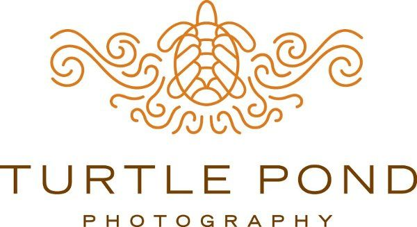 turtle pond photography