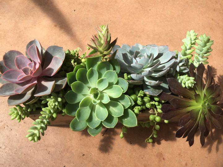 Tmx 1473176359179 Bonnies Succulent Boxes Silverthorne, Colorado wedding florist
