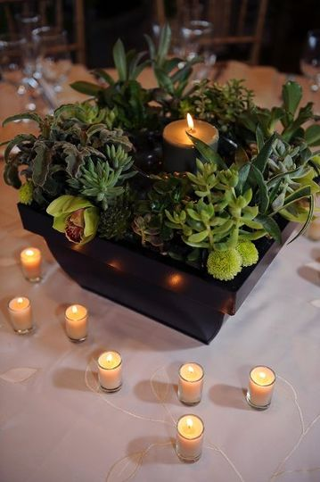 Succulents and candlelights
