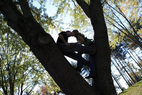 Love Birds sitting in tree