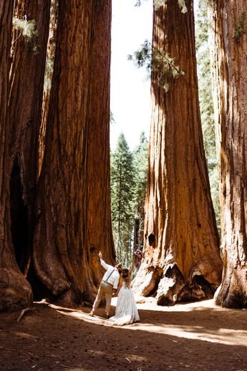 Sequoia National Park Elopemen