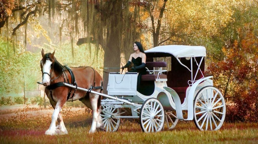 Southern Elegance Carriages LLC - Preferred Vendor  Clydesdale and carriage