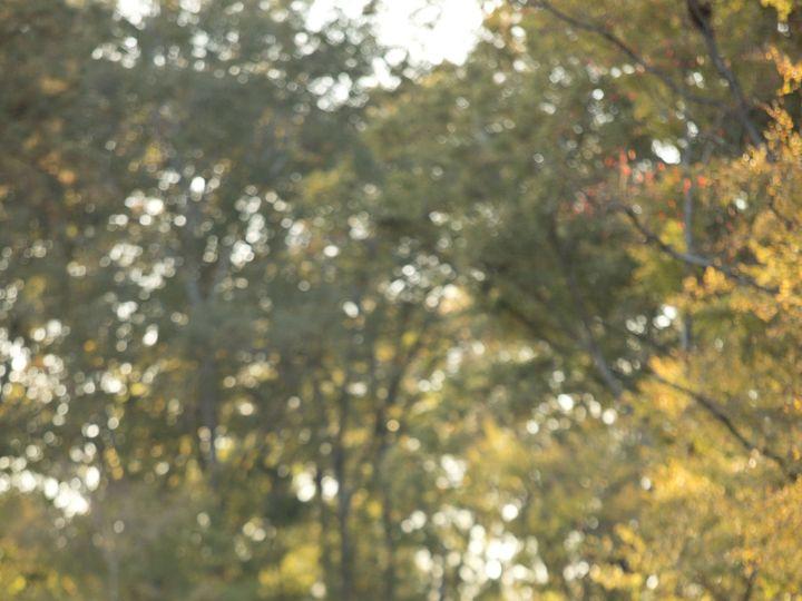 Tmx 1430842874775 Whitneymeltonbridals68 Ridgeland wedding photography