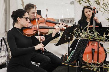 Wedding violins