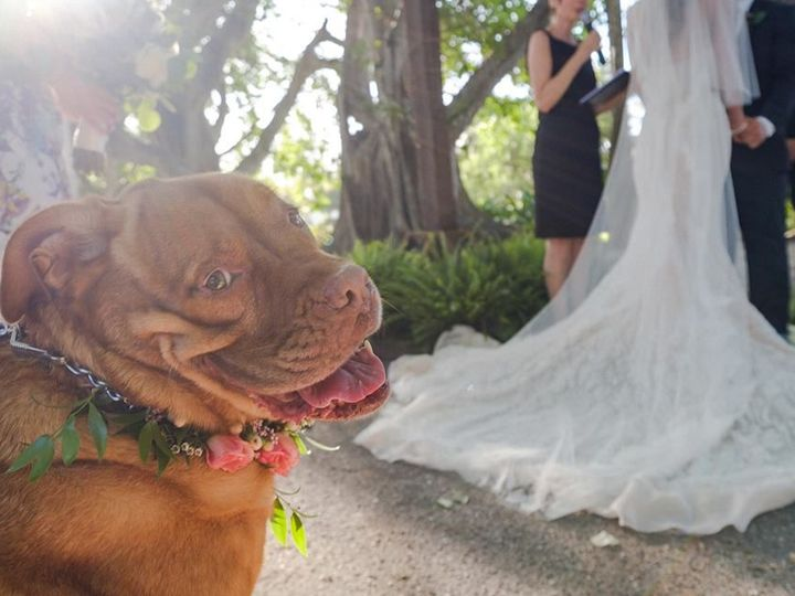 Tmx 1530385692 2744d07930492102 1530385691 6cce7f55c1accc9c 1530385691290 4 Chase And Courtney Sarasota wedding officiant