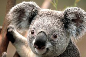 www.koalatyfloraldesigns.com
