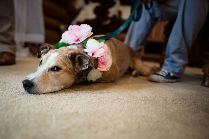 Our bored, patient Flower-dog