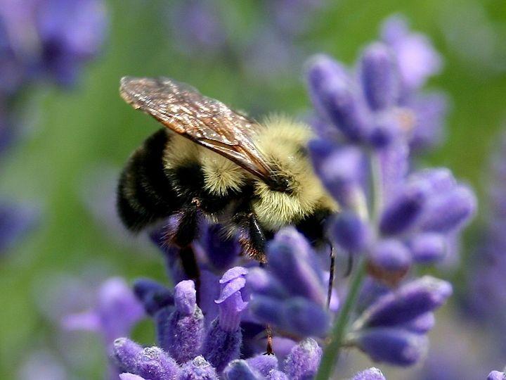 Tmx 1466528800129 Img6846 Bee Use Fly Creek, NY wedding florist