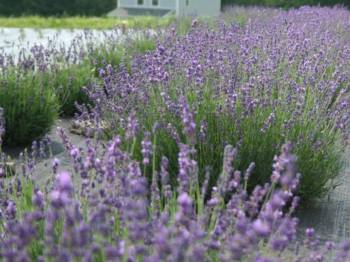 Tmx 1466529697934 House Use 2 Fly Creek, NY wedding florist